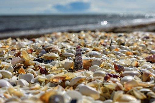 Mussels, Horizon, Sea, Coast, Mood, Sky, Nature