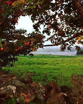Colors, Mist, Light, Autumn, Tree, Shadow, Stones