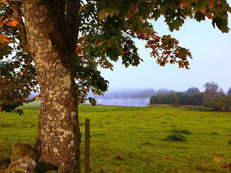 Autumn, Himmel, Lake, Tree, Sweden, Nature
