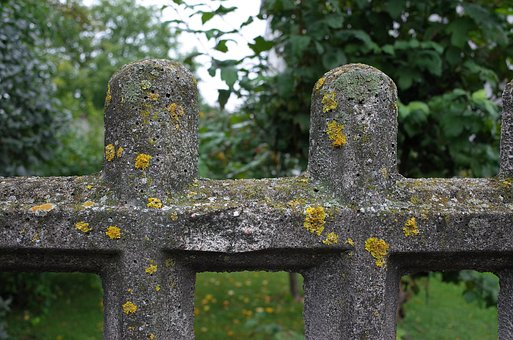 Mosses, Lichens, The Fence, Stone