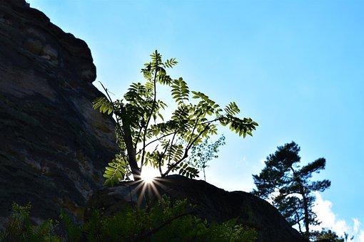 The Prachovské Rocks, Trees, Sun, Rock, Heaven, Glow