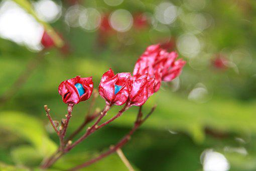 Flowers, Red, Turquoise, Green, Plant, Pink, Flora