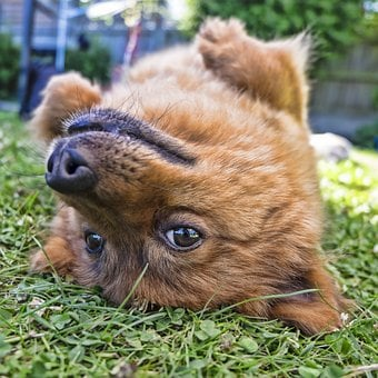 Dog, Upside Down, Square, Pet, Animal, Funny, Upside