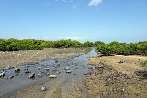 Mangroves, Creek, Vegetation, Forest, Swamp, Habitat