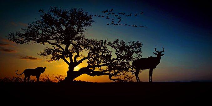 Africa, Animal World, Wilderness, Savannah, Nature
