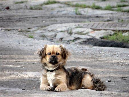 Dog, Small, Animal, A Friend Of Man, Mammal, Way