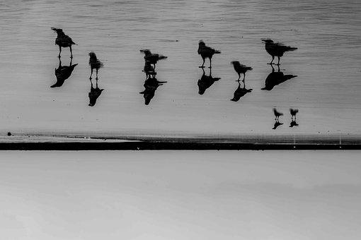 Crow, Photography, Bird, Black, Silhouette