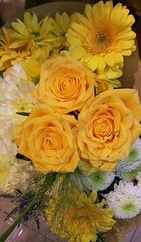 Yellow, Rose, Bright, Close, Rose Yellow, Petals