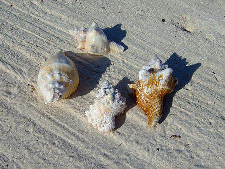 Zanzibar, Beach, Mussels, Sand, Holiday, Sea