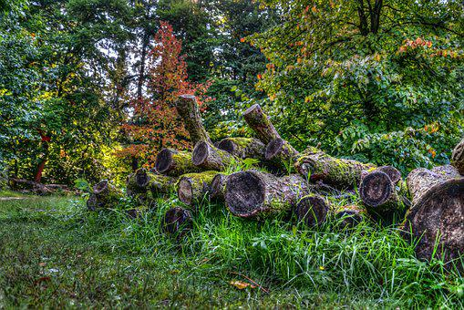 Logs, Forest, Wood, Autumn, Tree, Cut, Lumber, Timber