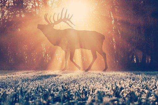Silhouette, Snow, Morning, Sunrise, Sunrises, Winter