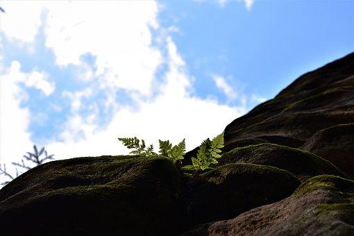 The Prachovské Rocks, Bracken, Sun, Rock, Heaven, Glow