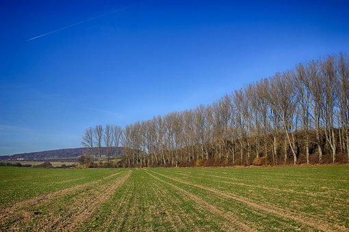 Field, Seed, Trees, Row Of Trees, Sky, Blue