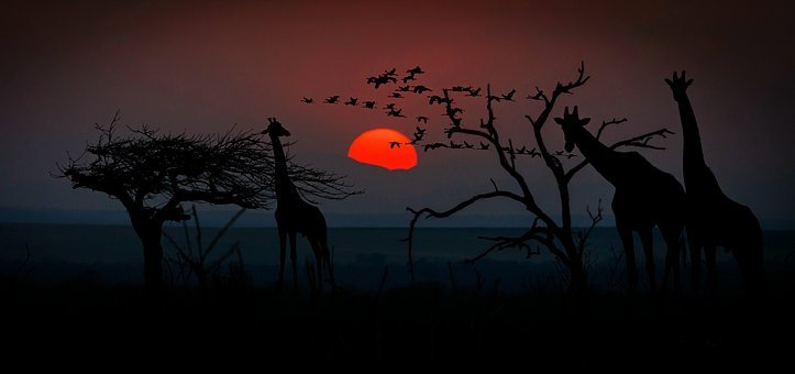 Africa, Giraffes, Animal World, Wilderness, Savannah