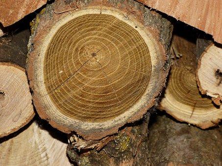 Wood, Acacia, Fuel, Drying