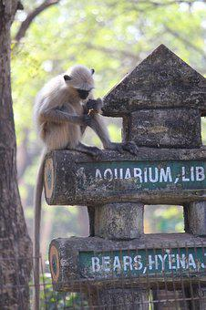 Monkey, Nature, Animal, Sitting, Park, Asia, Zoo