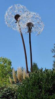 Art, Flower, Garden, Partially Welded, Filigree