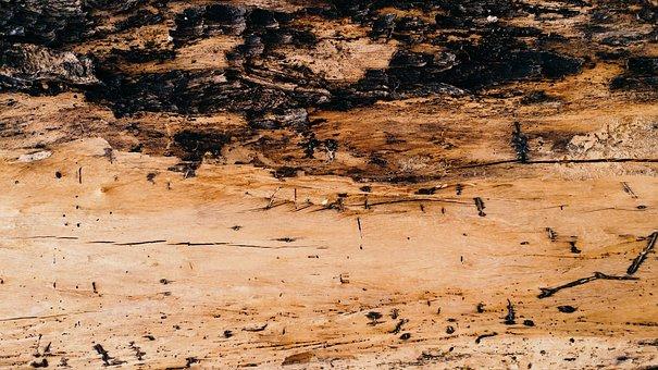 Bark, Textures, Wood, Dry, Timber, Lumber, Nature