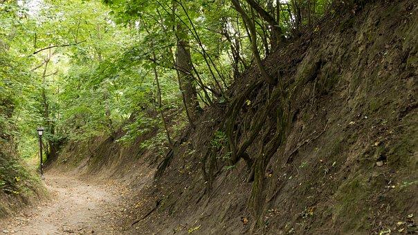 Nature, Gorge, Green, Landscape