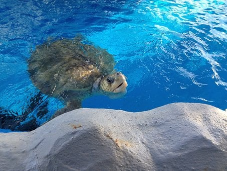 Tamar Project, Turtle, Aracaju, Animals, Water, Mar