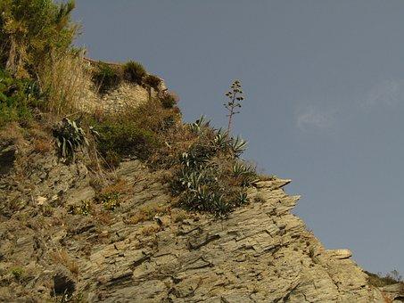 Plant, Liguria, Cinque Terre, Mountain, Cliff