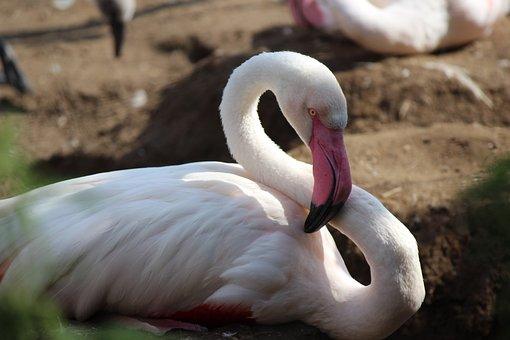 Zoo, Flamingo, Bird, Pink, Pink Flamingo, Feather