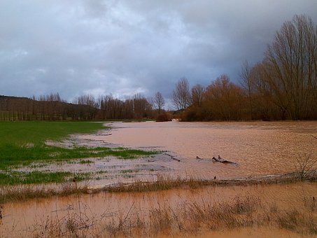 Flood, River, Rain, Grown, Water, Field, Agriculture