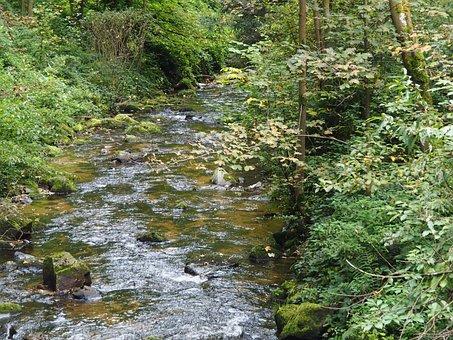 Bach, River, Forest, Landscape, Autumn, Green, Blatter