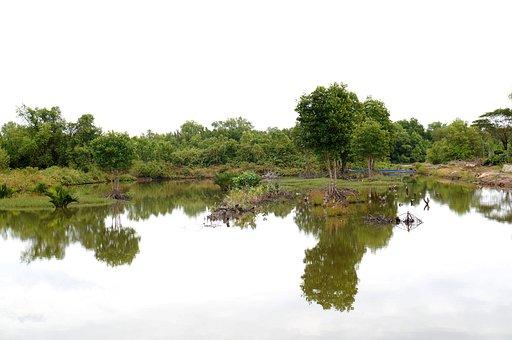 The Shrimp Farm, Reflect, Stilling, Vietnam