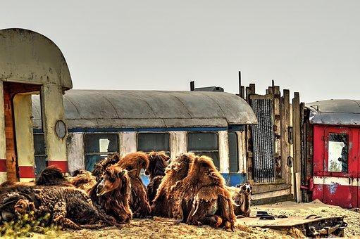 Desert, Wagons, Camels, Off Track, Emmen