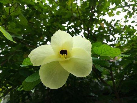 Flowers Kalong, Flowers, Yellow