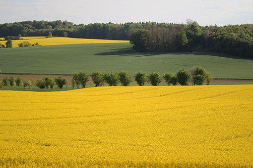 Fields, Rapeseed, Yellow, Nature, Spring
