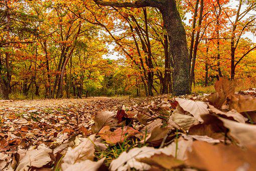And Thu, Autumn, Autumn Leaves, The Leaves, Yellow