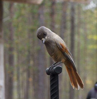 Forest, Living Nature, Nature, Bird, Birds, Live