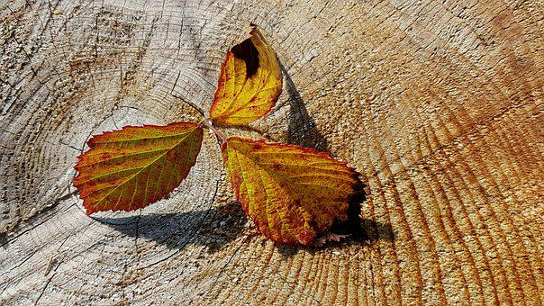 Autumn, Fall Foliage, Herbstimpression, Fall Color