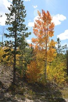 Autumn, Fall, Bush, Landscapes, Landscape, Forest