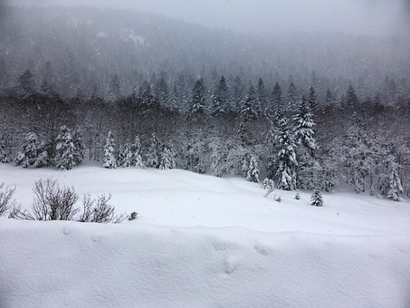 Snow, Forest, Trees, Fir, Winter, Cold, Picture