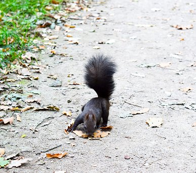 Squirrel, Forest, Leaves, Nature, Animal, Cute, Park