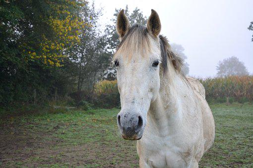 Horse, Domestic Animal, Horseback Riding, Equine, Look