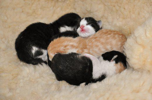 Kittens, Animal Shelter, Reborn, Young Cat