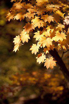 Autumn, Autumn Leaves, Dobong, The Leaves, Leaves, Wood