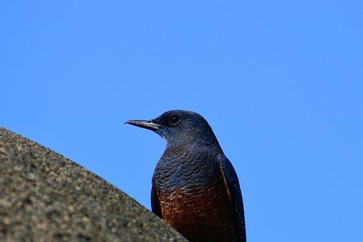 Animal, Sky, Sea, Wild Birds, Little Bird