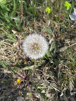 Flower, Spring, Ot