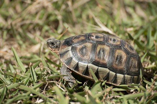 Tortoise, Reptile, Reptiles, Patterns, Wildlife
