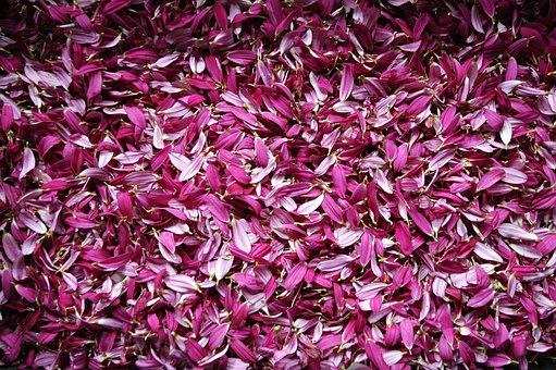 Petal, Flowers, Deleafing, Flower, Nature, Petals Pink