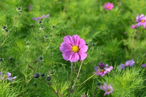 Pink Flowers, Corner Rustic, Nature, Massif, Flower