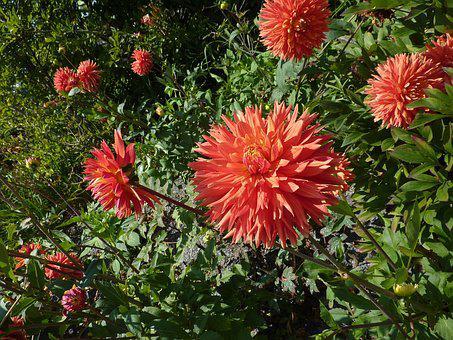 Red Flowers, Red Flower, Green Leaves, Petals, Nature