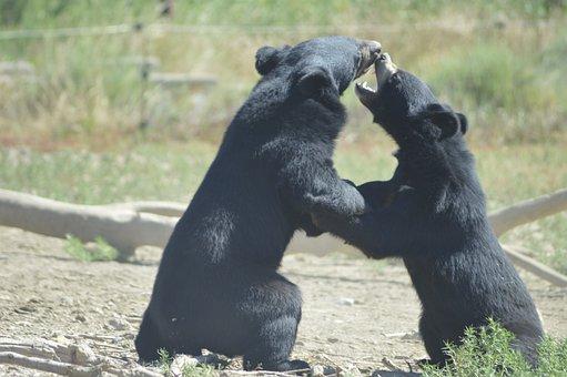 Sigean, Reserve, Zoo, Safari, Wildlife, Park, Languedoc