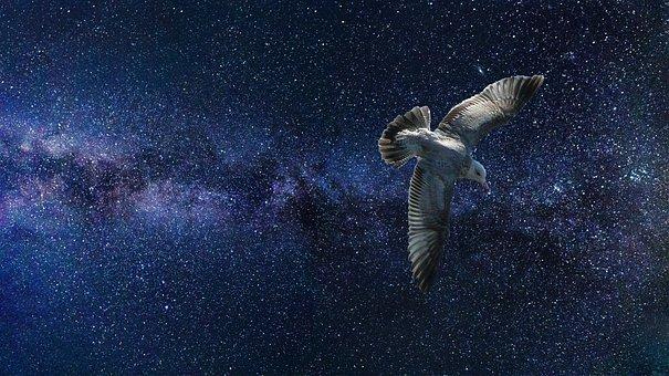 Universe, Bird, Space, Stars, Fantasy, Sky, Nature