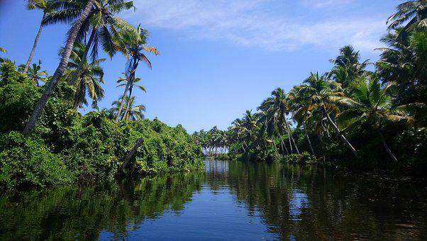 Trees, Green Trees With Water, Kerala, Gods Own Country